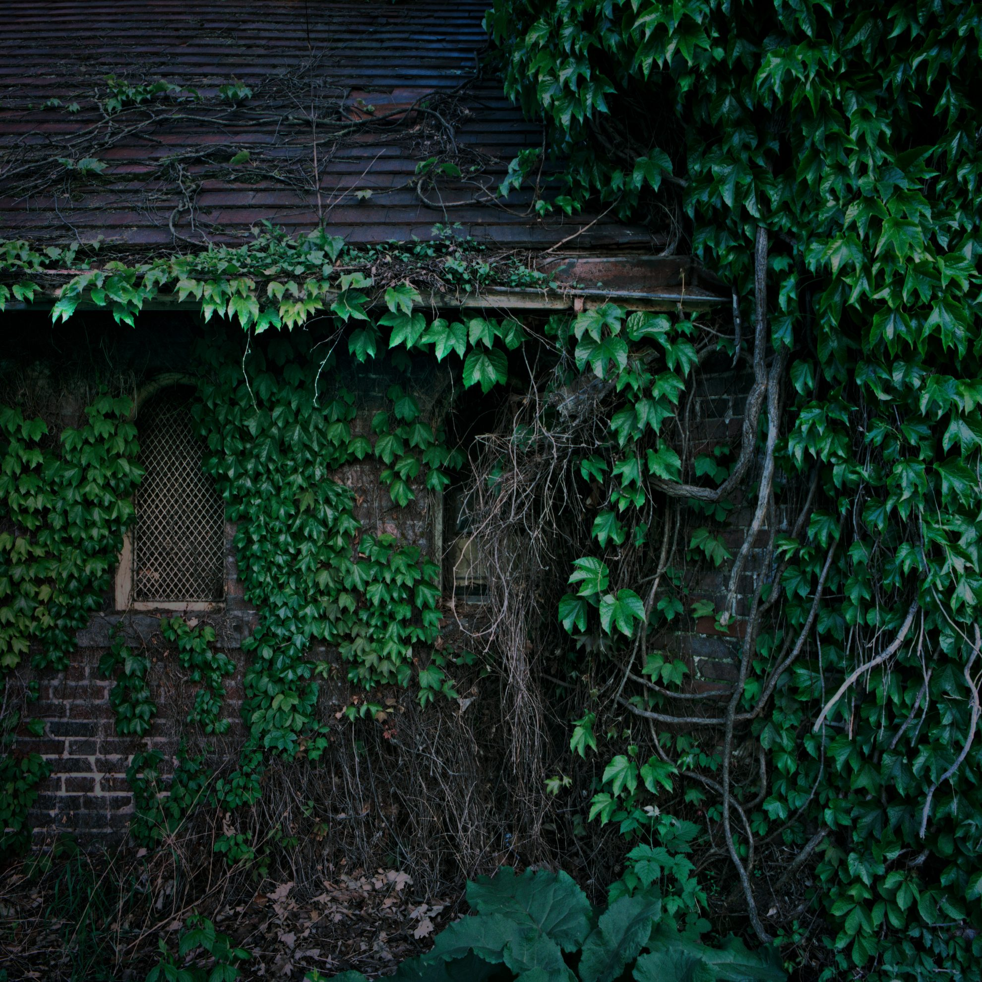 Abandoned, ivy covered building on Belle Isle. Detroit, Michigan.