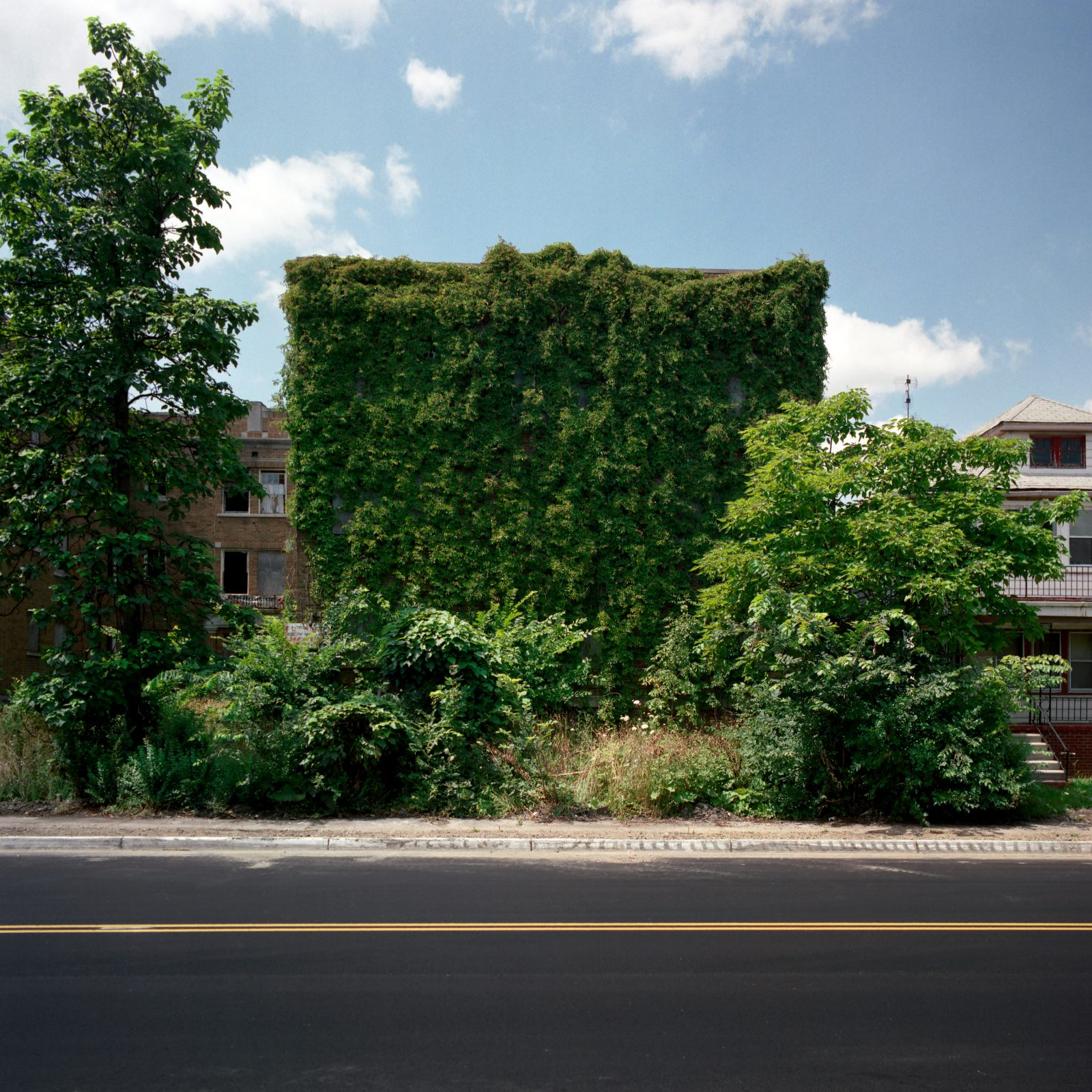 Abandoned apartment on Detroit's East Side, covered in ivy.