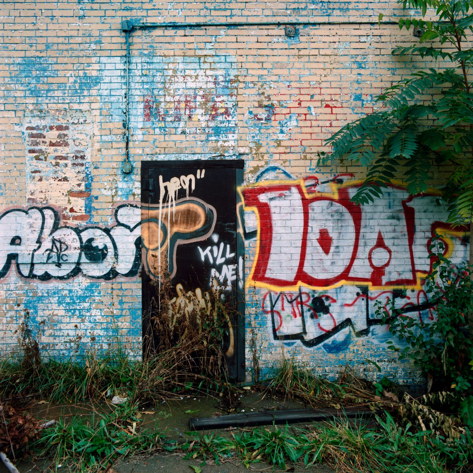 Abort Toad graffiti. Detroit, Michigan.