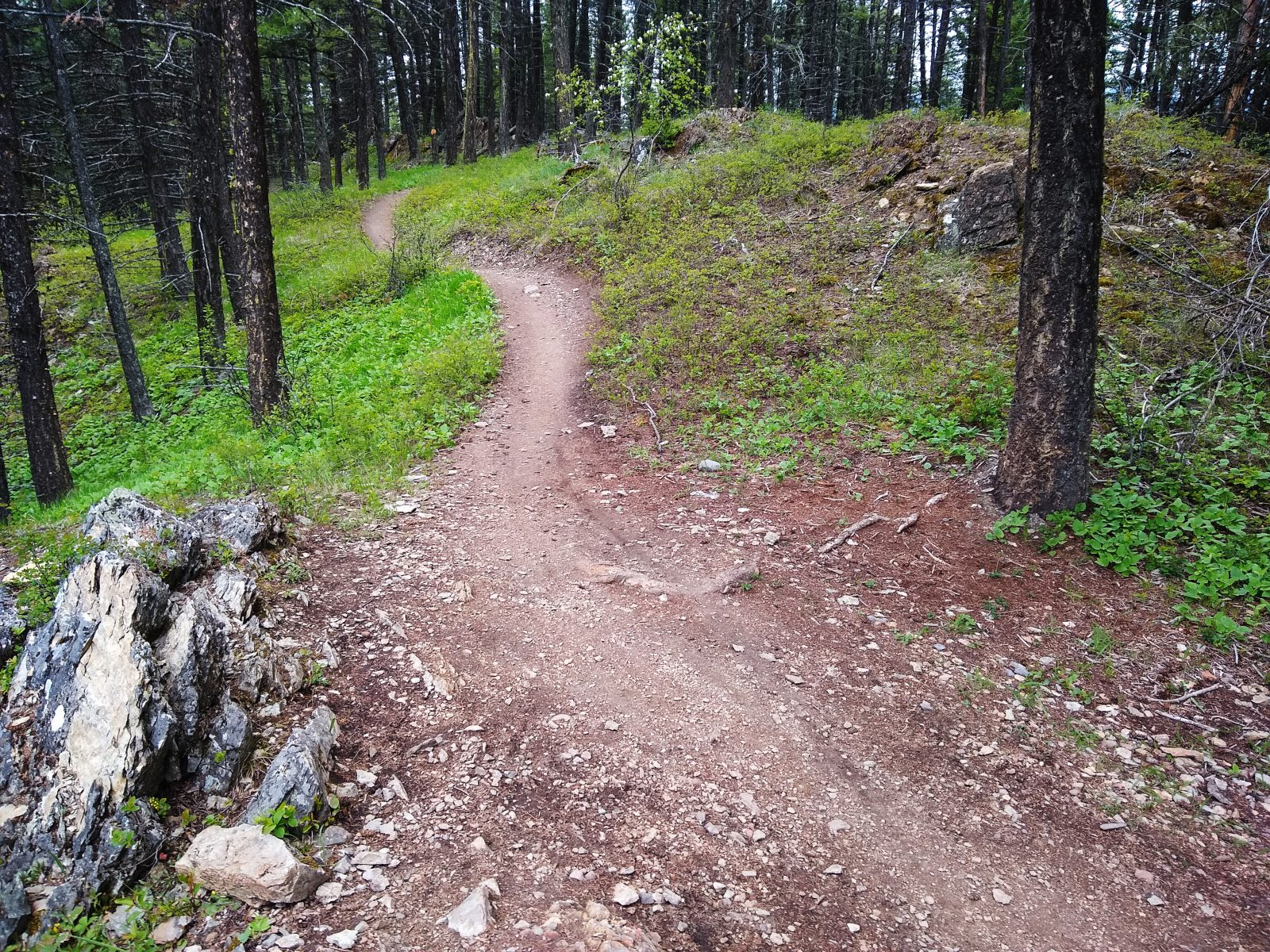 Whitefish Trail - May 16, 2020