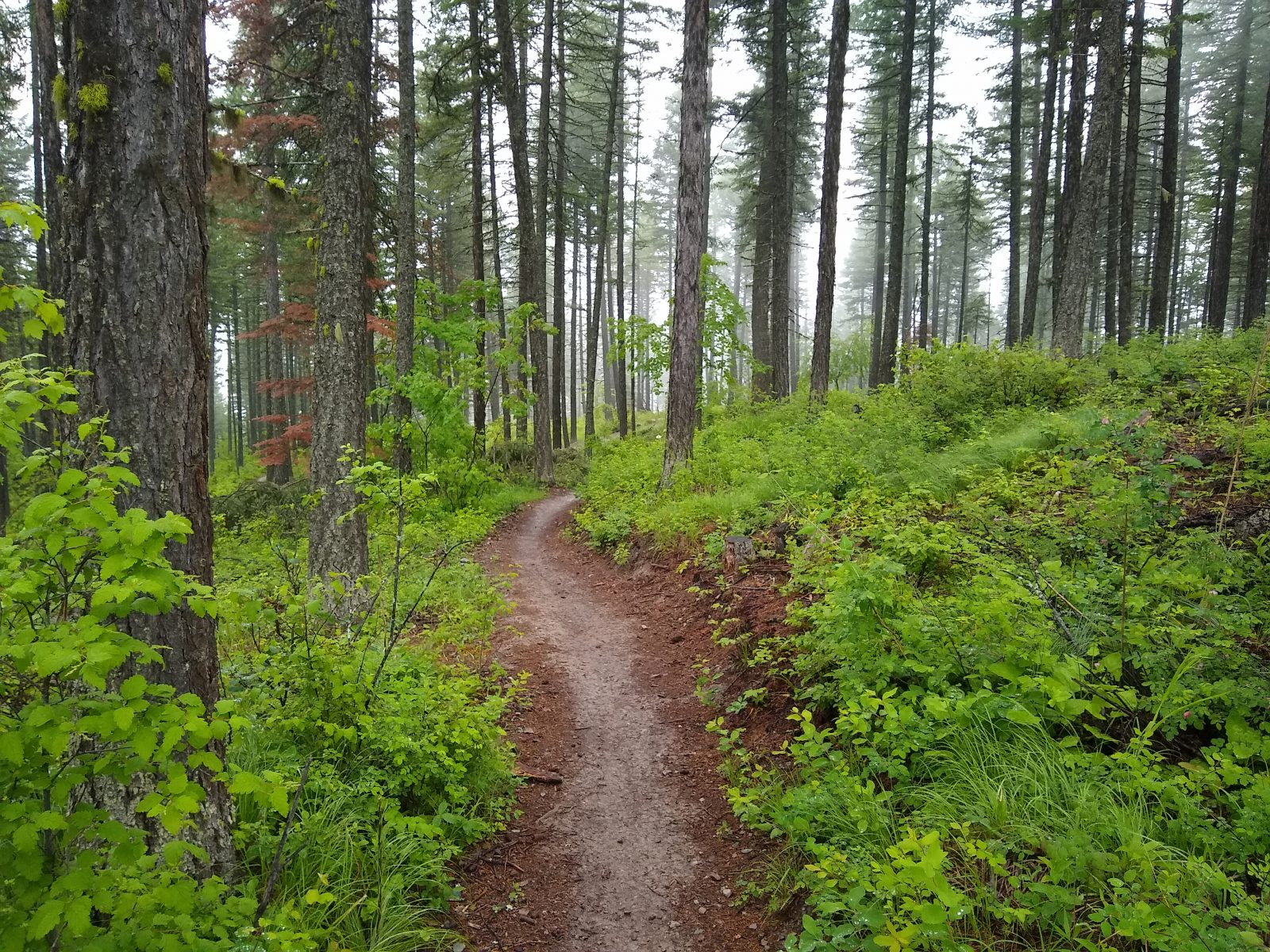 Whitefish Trail - June 21, 2020